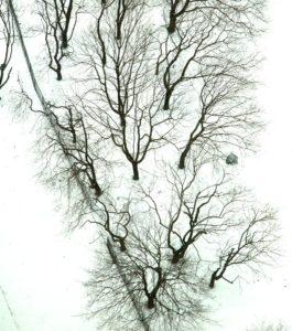 drzewa z lotu ptaka
