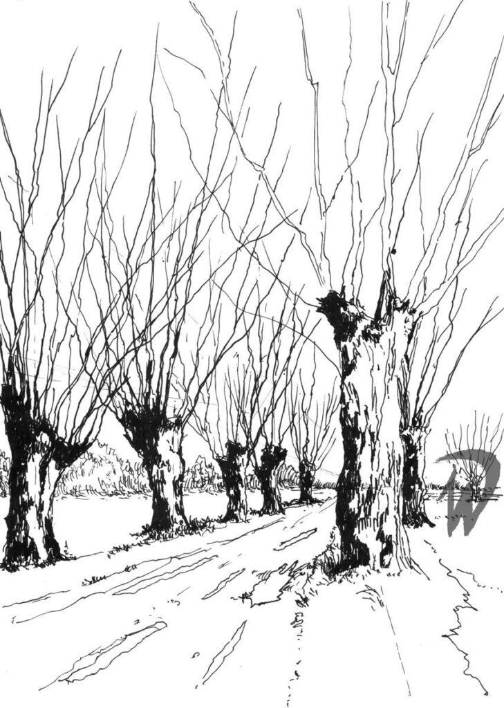 rysunek ołówkiem i cienkopisem